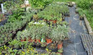 Pflanzenverkauf