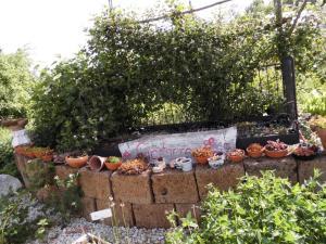 Altes Eisenbettgestell als Rankhilfe für Brombeeren