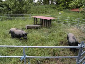 Sommer-Frei-Gehege für die Schweine, wird in der Permakultur als Schweinetraktor bezeichnet