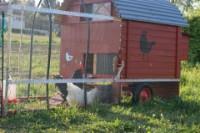 Hühnertraktor