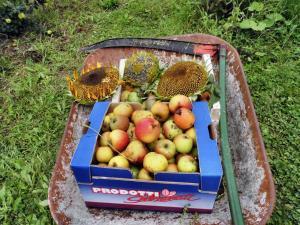 Bei jedem Gang durch den Waldgarten wird die Schubkarre voll. Hier mit Fall-Äpfel und geernteten Sonnenblumen