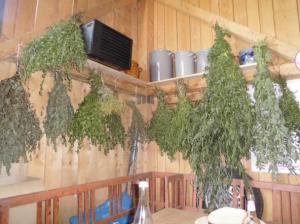 Kräuter in der Sommerküche