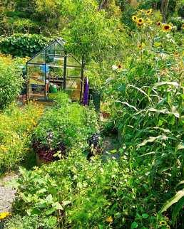 02_Buttenshawfarm glasshouse garden